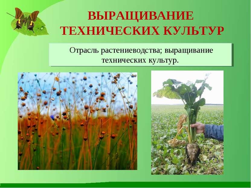 ВЫРАЩИВАНИЕ ТЕХНИЧЕСКИХ КУЛЬТУР Отрасль растениеводства; выращивание техничес...