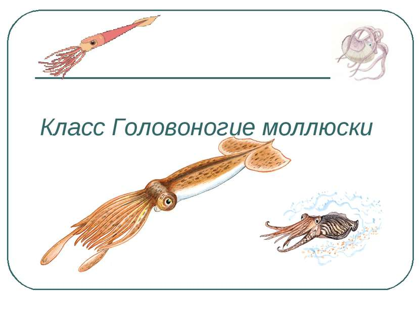 Класс Головоногие моллюски