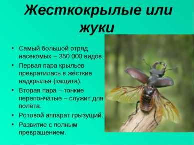 Жесткокрылые или жуки Самый большой отряд насекомых – 350 000 видов. Первая п...