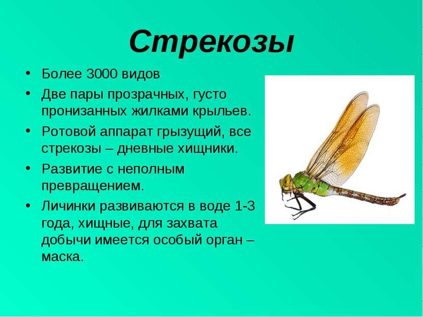 Стрекозы Более 3000 видов Две пары прозрачных, густо пронизанных жилками крыл...