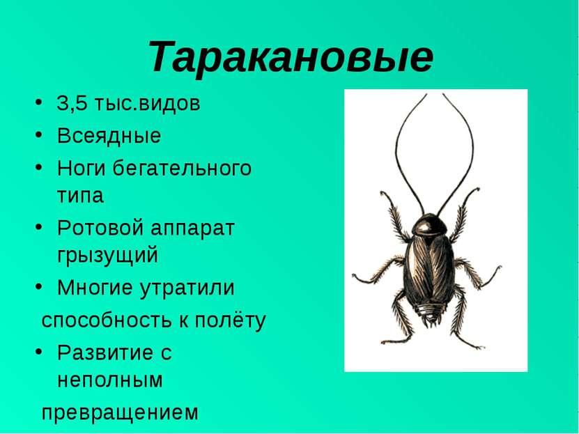 Таракановые 3,5 тыс.видов Всеядные Ноги бегательного типа Ротовой аппарат гры...