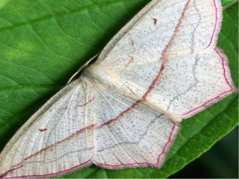 Развитие бабочек