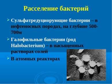 Расселение бактерий Сульфатредуциорующие бактерии – в нефтеносных породах, на...