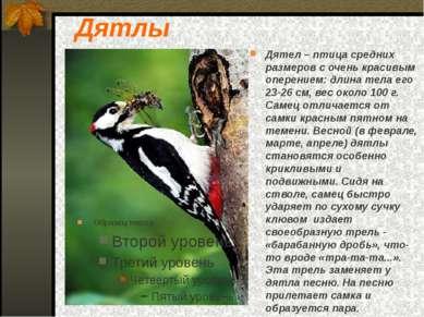 Дятлы Дятел – птица средних размеров с очень красивым оперением: длина тела е...