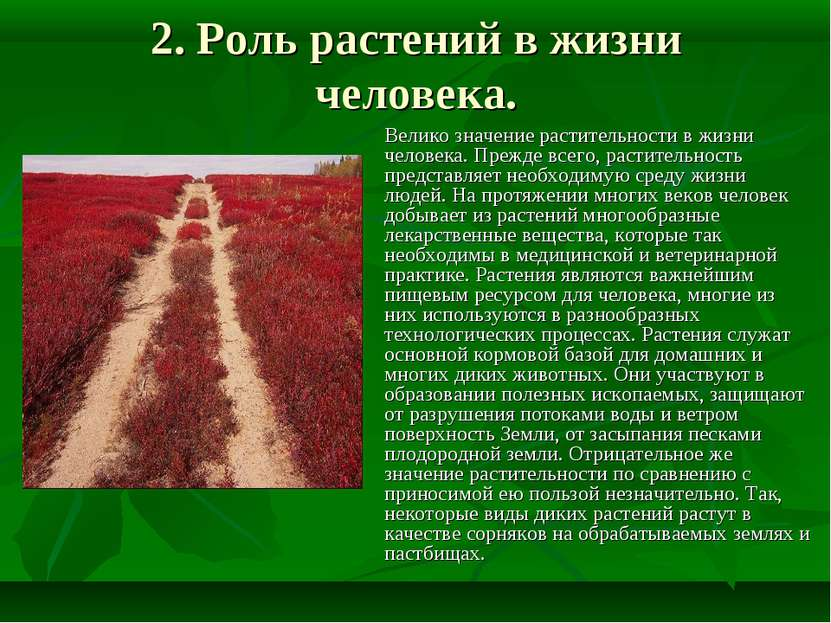 2. Роль растений в жизни человека. Велико значение растительности в жизни чел...