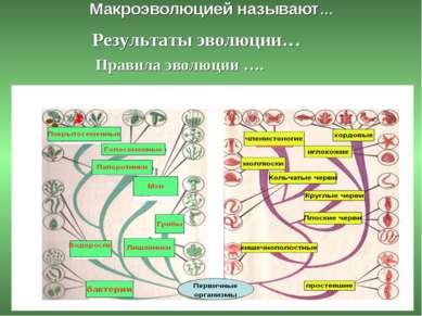 Макроэволюцией называют… Результаты эволюции… Правила эволюции ….