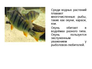 Среди водных растений плавают многочисленные рыбы, такие как окуни, караси, я...