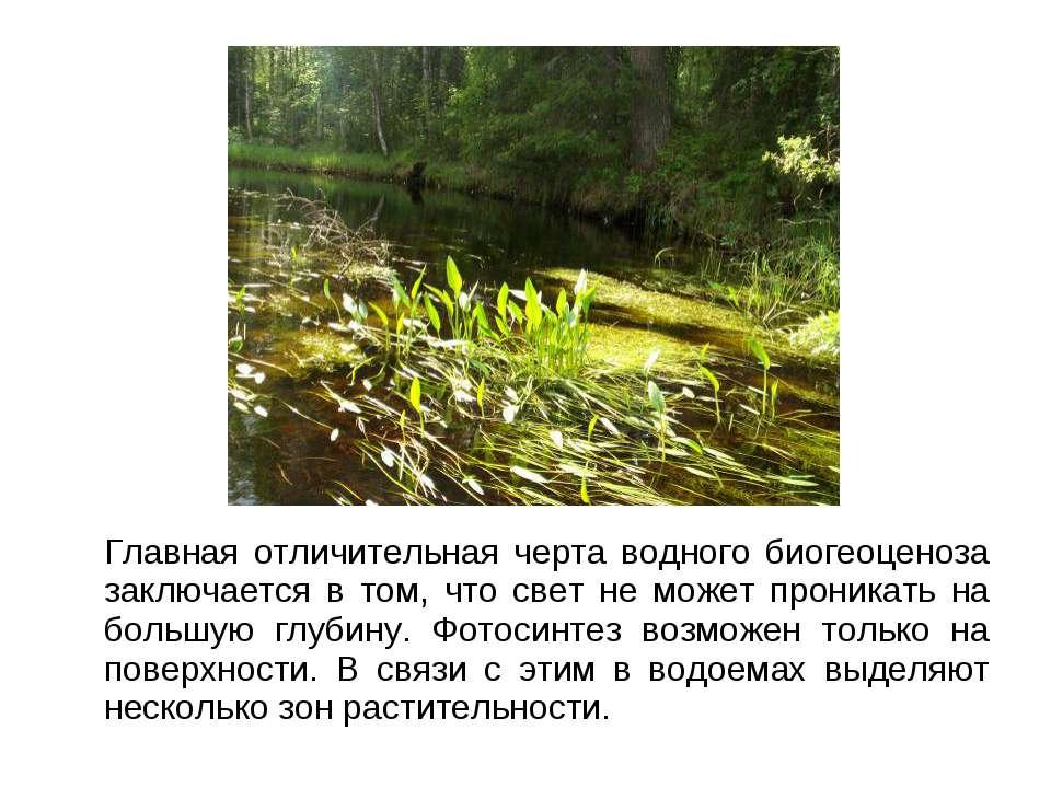 Главная отличительная черта водного биогеоценоза заключается в том, что свет ...