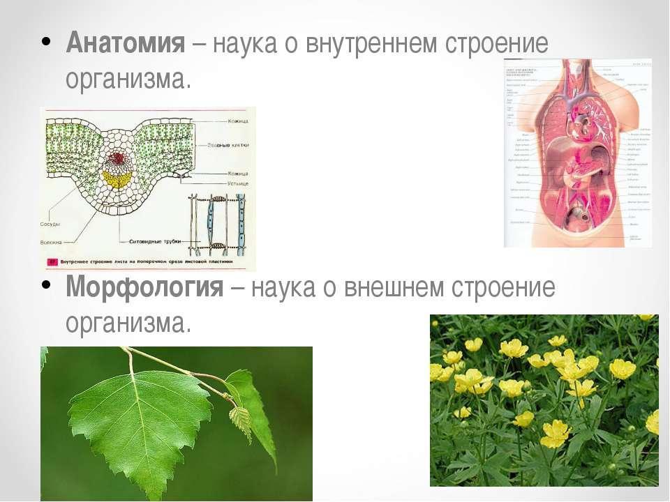 Анатомия – наука о внутреннем строение организма. Морфология – наука о внешне...