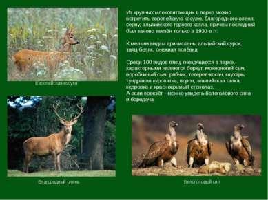 Из крупных млекопитающих в парке можно встретить европейскую косулю, благород...
