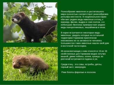 Разнообразие животного и растительного мира полностью соответствует разнообра...