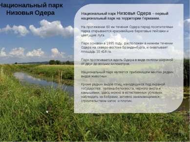 Национальный парк Низовья Одера первый национальный парк на территории Герман...