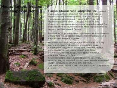 Национальный парк Баварский Лес - первый национальный парк, открытый 7 октябр...