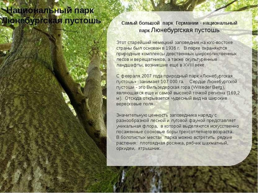 Самый большой парк Германии - национальный парк Люнебургская пустошь Этот ста...