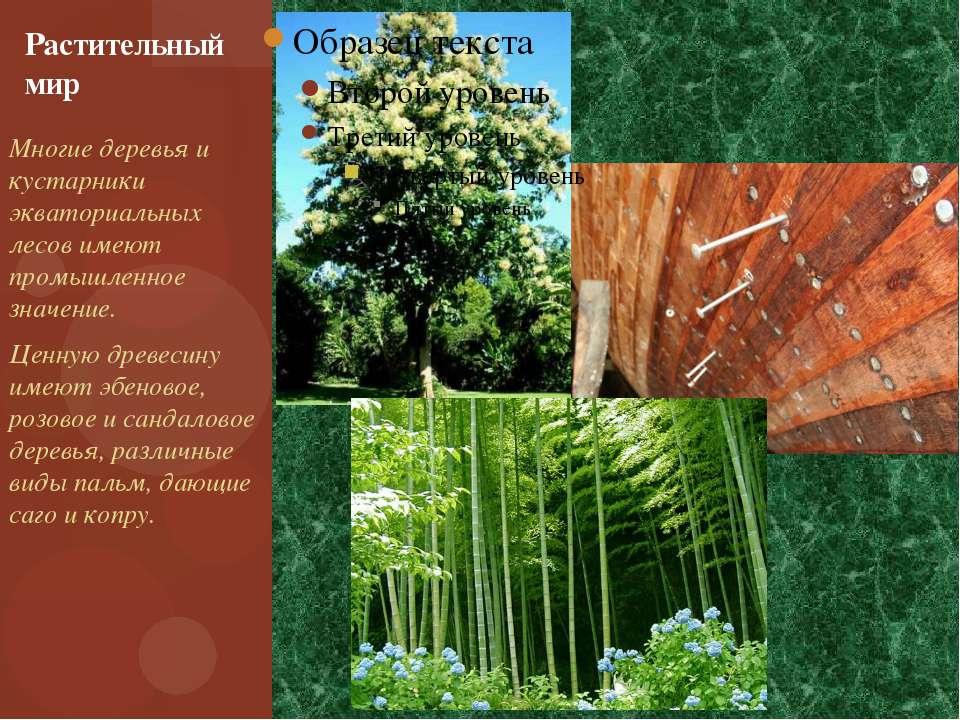 Многие деревья и кустарники экваториальных лесов имеют промышленное значение....