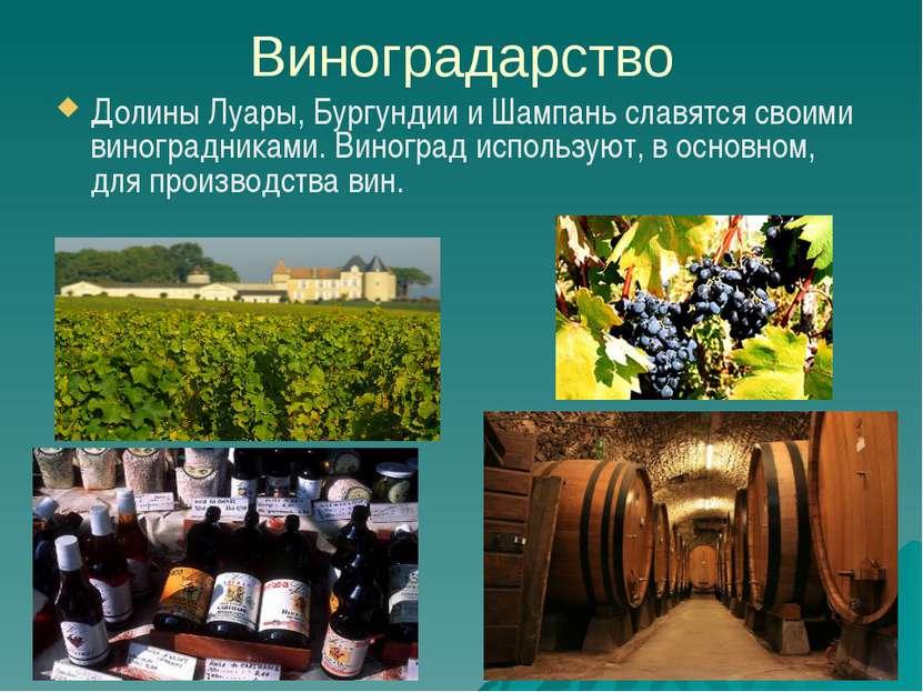 Виноградарство Долины Луары, Бургундии и Шампань славятся своими виноградника...