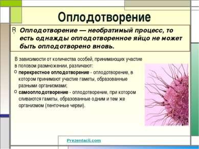 Оплодотворение Оплодотворение — необратимый процесс, то есть однажды оплодотв...
