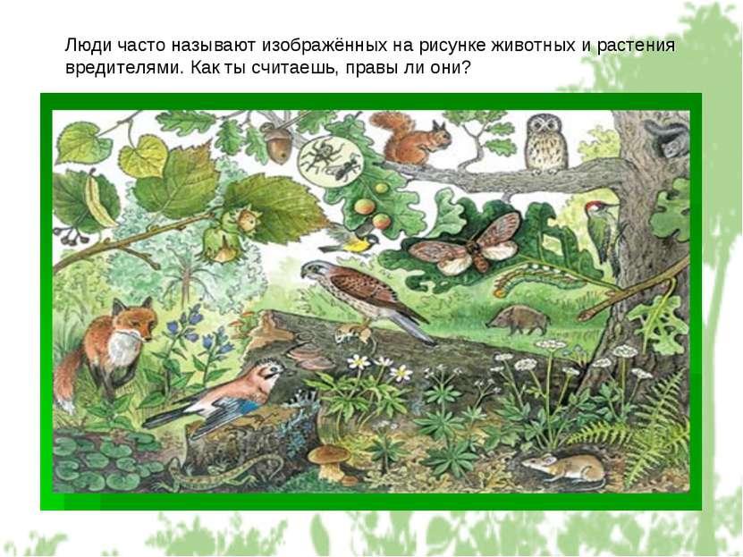 Люди часто называют изображённых на рисунке животных и растения вредителями. ...
