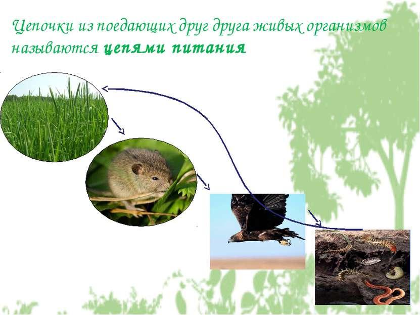 Цепочки из поедающих друг друга живых организмов называются цепями питания