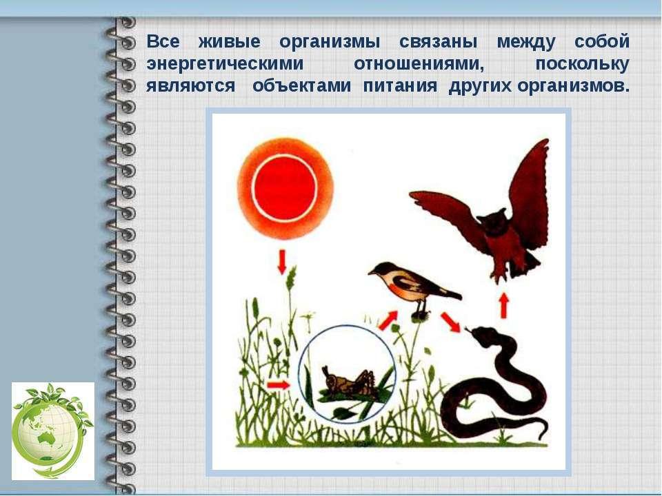 Все живые организмы связаны между собой энергетическими отношениями, поскольк...