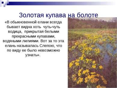 Золотая купава на болоте «В обыкновенной елани всегда бывает видна хоть чуть-...