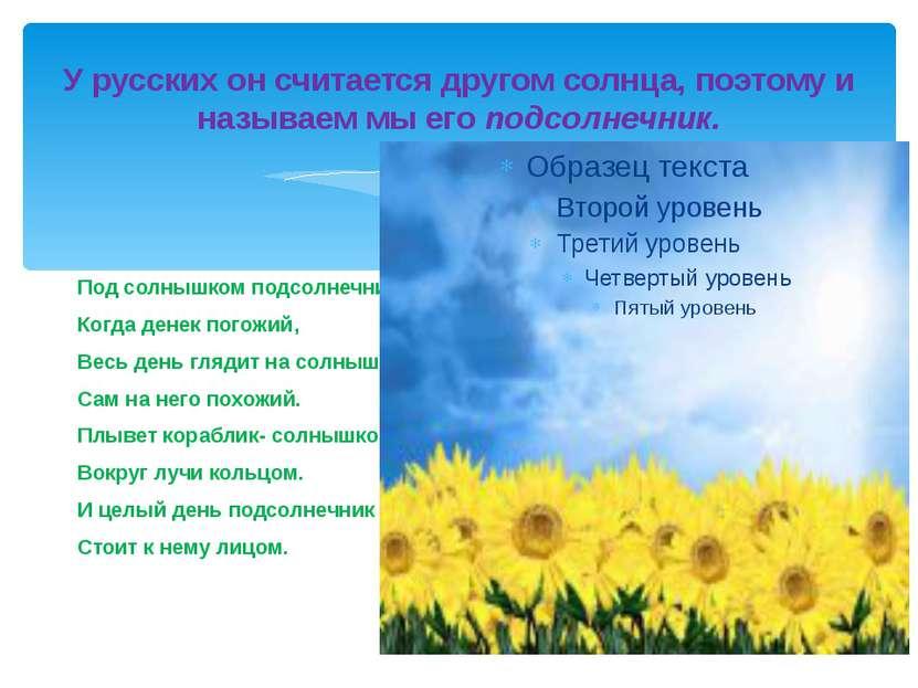 У русских он считается другом солнца, поэтому и называем мы его подсолнечник....