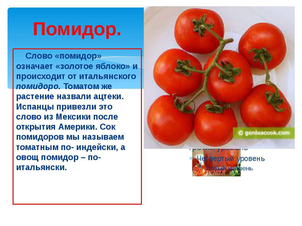 Помидор. Слово «помидор» означает «золотое яблоко» и происходит от итальянско...