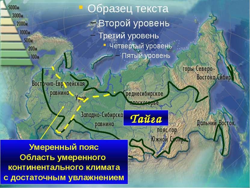 Тайга Умеренный пояс Область умеренного континентального климата с достаточны...