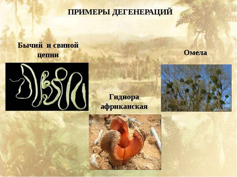 ПРИМЕРЫ ДЕГЕНЕРАЦИЙ Гиднора африканская Бычий и свиной цепни Омела