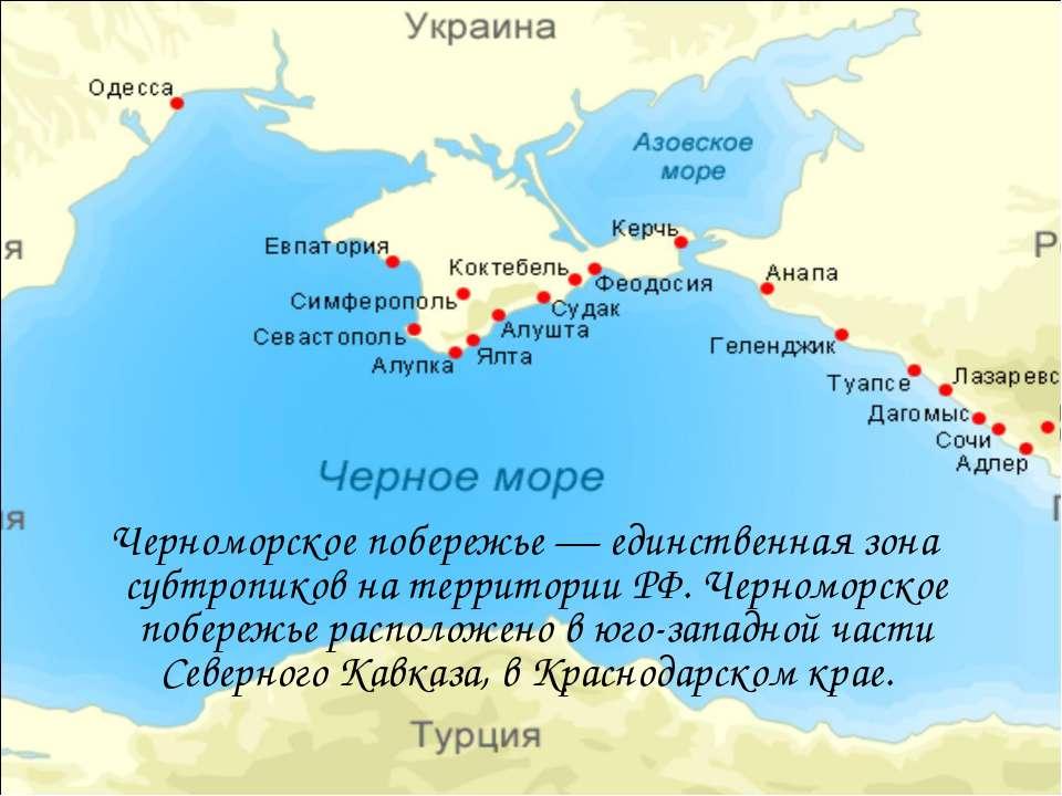 Черноморское побережье — единственная зона субтропиков на территории РФ. Черн...