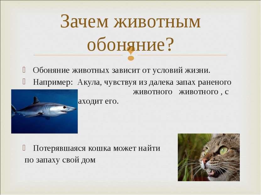 Обоняние животных зависит от условий жизни. Например: Акула, чувствуя из дале...
