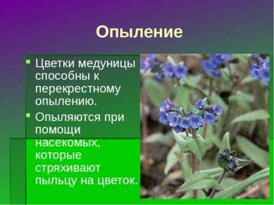 Опыление Цветки медуницы способны к перекрестному опылению. Опыляются при пом...
