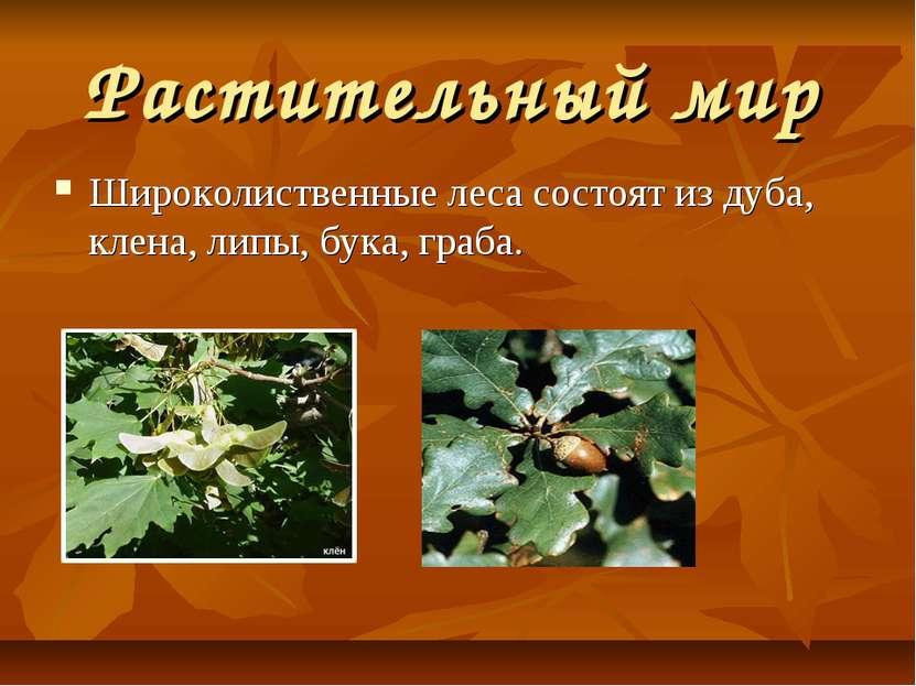 Растительный мир Широколиственные леса состоят из дуба, клена, липы, бука, гр...