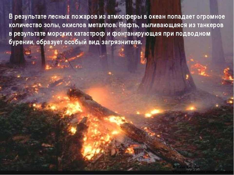 В результате лесных пожаров из атмосферы в океан попадает огромное количество...