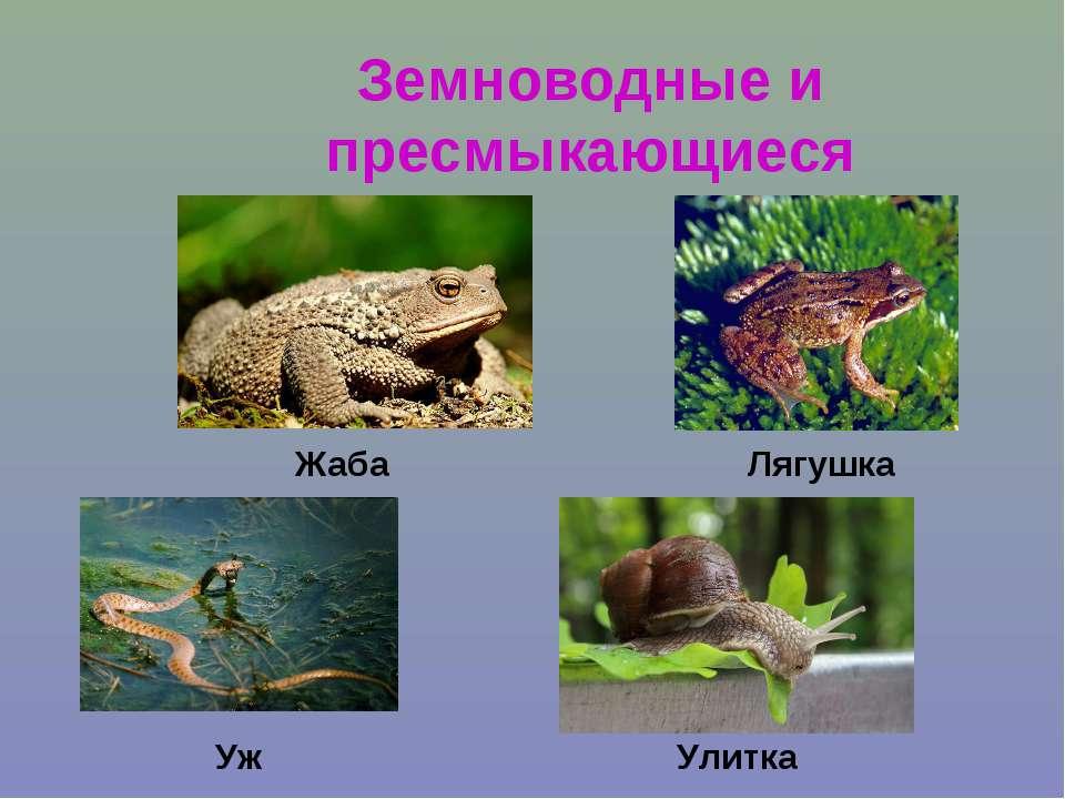 Земноводные и пресмыкающиеся Жаба Уж Улитка Лягушка