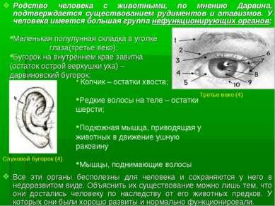 Родство человека с животными, по мнению Дарвина, подтверждается существование...