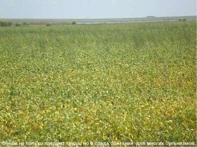 Почва не только предмет труда, но и среда обитания для многих организмов.