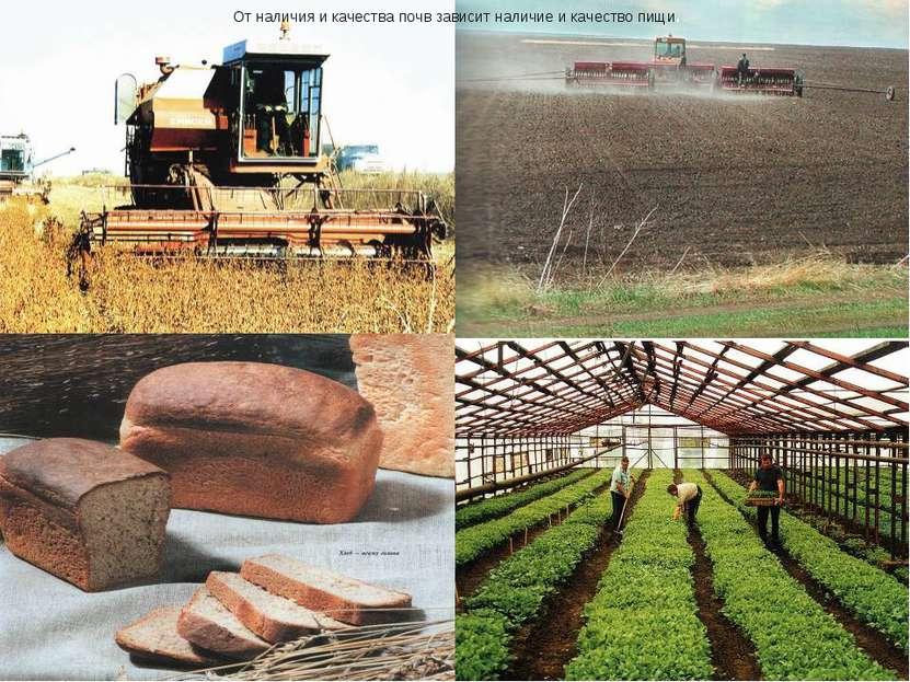 От наличия и качества почв зависит наличие и качество пищи.