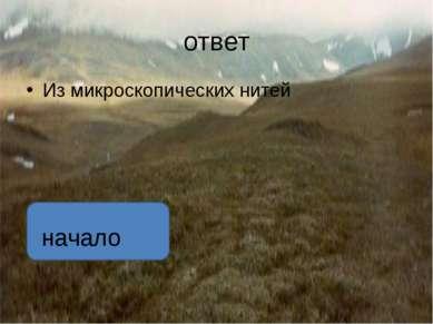 ответ Горец живородящий растет только в тундре, лесотундре и на высокогорных ...