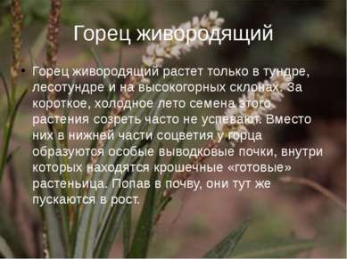 Горец живородящий Горец живородящий растет только в тундре, лесотундре и на в...