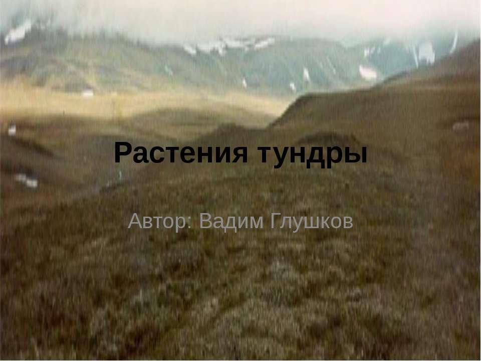 Растения тундры Автор: Вадим Глушков автор:вадим глушков