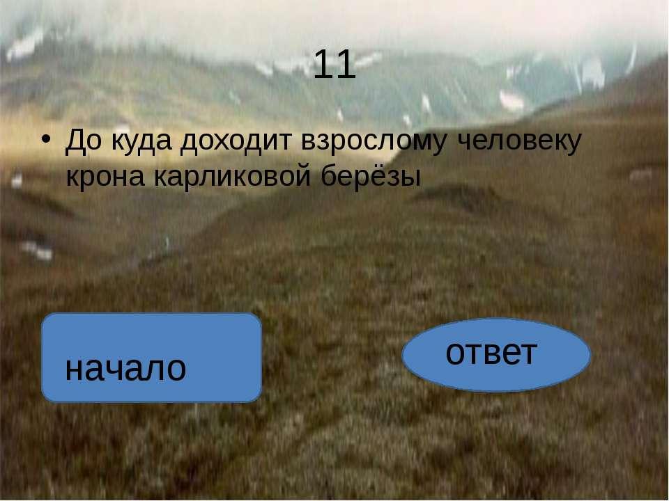 ответ желто-оранжевые. автор:вадим глушков начало