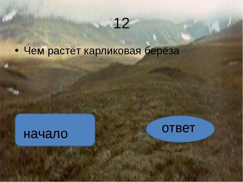 ответ чернику автор:вадим глушков начало