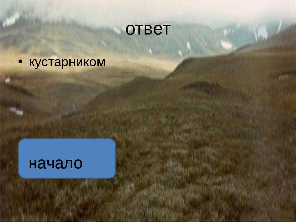 ответ . Растет голубика в заболоченной тундре и высоко в горах автор:вадим гл...