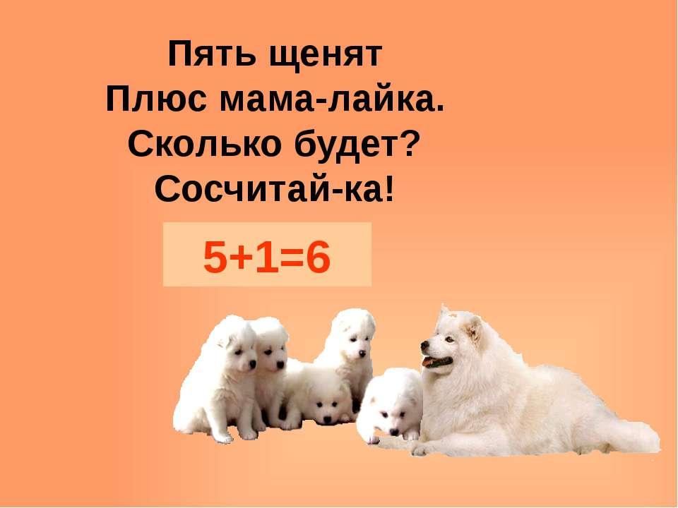 Пять щенят Плюс мама-лайка. Сколько будет? Сосчитай-ка! 5+1=6