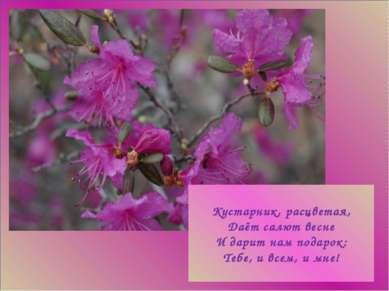 гггг Кустарник, расцветая, Даёт салют весне И дарит нам подарок: Тебе, и всем...