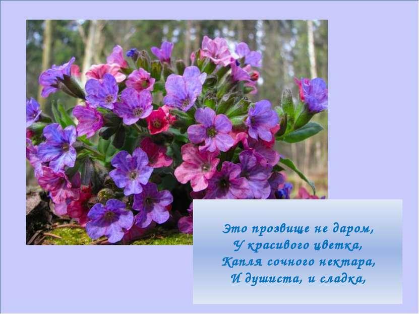Это прозвище не даром, У красивого цветка, Капля сочного нектара, И душиста, ...