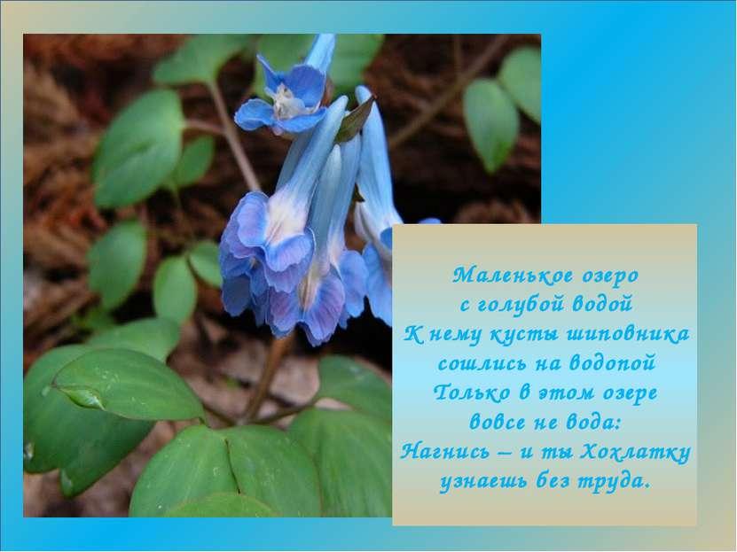 е Маленькое озеро с голубой водой К нему кусты шиповника сошлись на водопой Т...