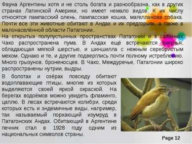В болотах и озёрах повсюду обитают водоплавающие птицы, многие из которых выд...