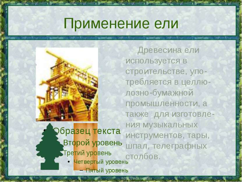 Применение ели Древесина ели используется в строительстве, упо-требляется в ц...